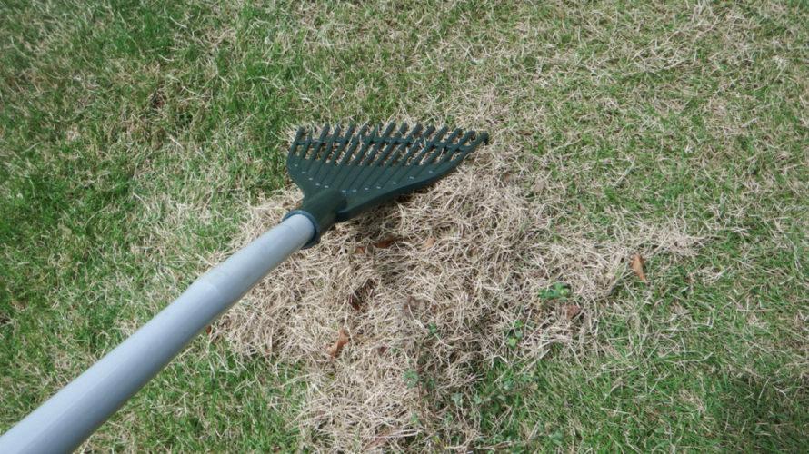芝生の通気性確保の為、サッチングしましょう!