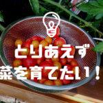 とりあえず家庭菜園を始めたい方へのプチトマト栽培の勧め