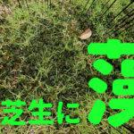 なんだこりゃ?芝生にぶよぶよの藻が生えた時の対処方法