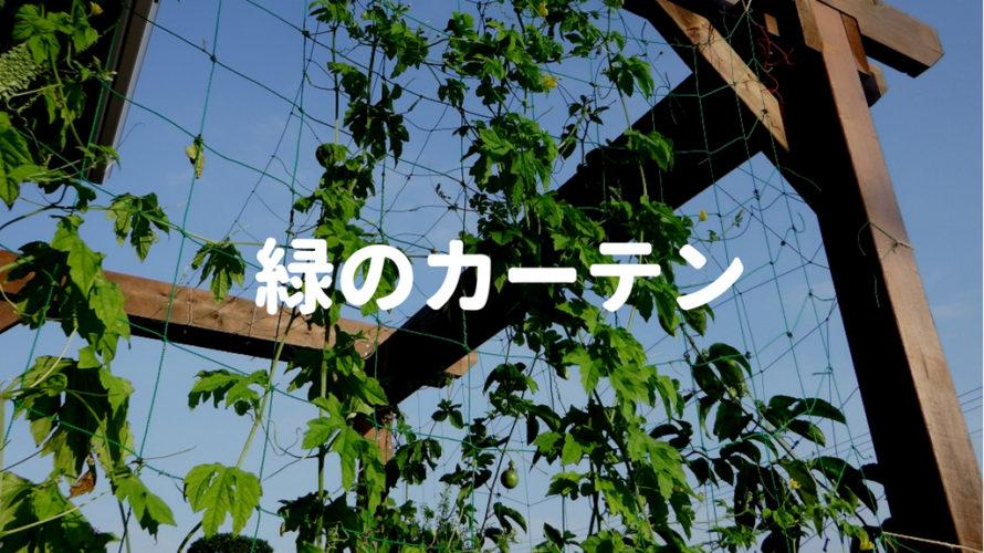 暑い日差しは植物の力で軽減!緑のカーテン設置方法のあれこれ