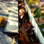 カーポートの雨どいに溜まった落ち葉の掃除。お庭に樹木を植える時は場所に注意!!
